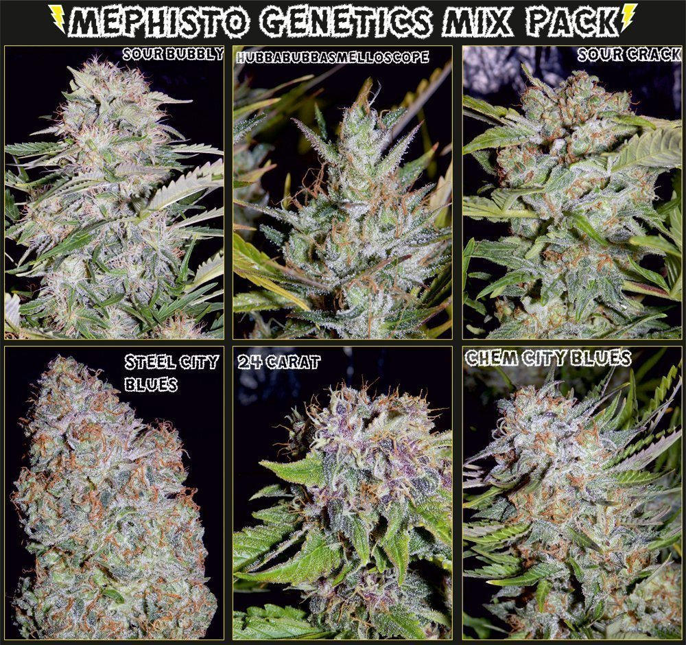 Mephisto Genetics Auto Elite Feminised Mix Pack