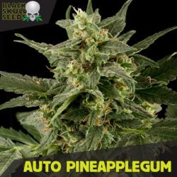 auto pineapple gum