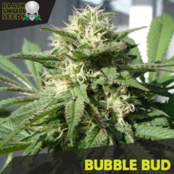 BUBBLE BUD FEMALE