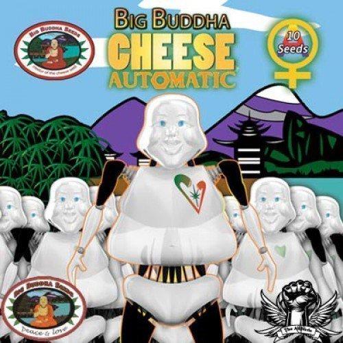 Big Buddha Seeds Cheese AUTO Feminised Seeds