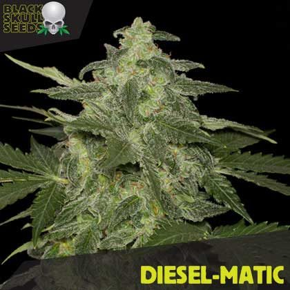 DIESEL-MATIC FEMALE