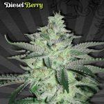 Diesel Berry