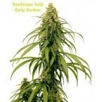 Seedsman Early Durban Regular Seeds