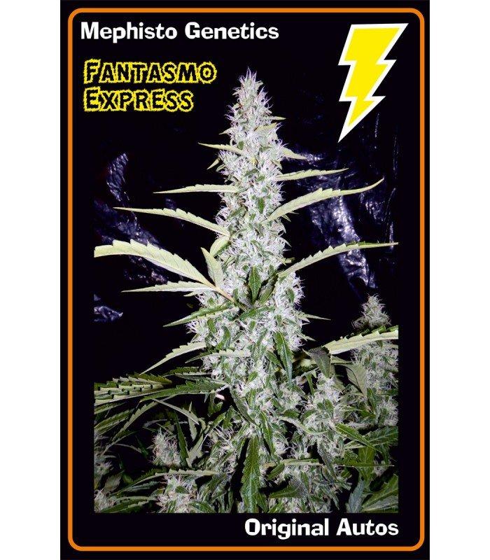 Mephisto Genetics Fantasmo Express Auto Feminised Seeds