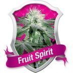 Royal Queen Seeds Fruit Spirit Feminised Seeds