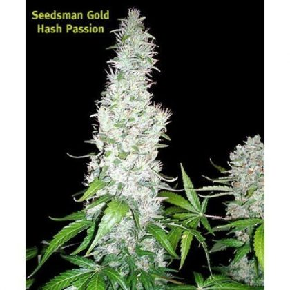Seedsman Hash Passion Regular Seeds
