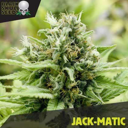 JACK-MATIC FEMALE