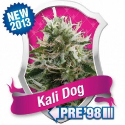 Royal Queen Seeds Kali Dog Feminised Seeds