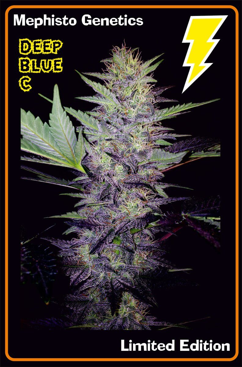 Mephisto Genetics Deep Blue C Auto Feminised Seeds