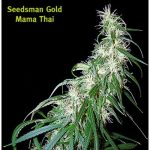 Mama Thai Regular Seeds