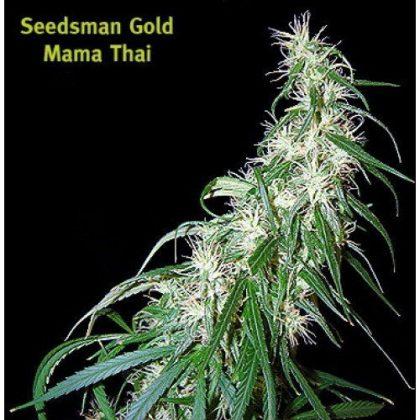 Seedsman Mama Thai Regular Seeds