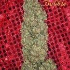 Mandala seeds Hubble Bubble Feminised