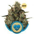Royal Queen Seeds Medical Mass Feminised Seeds