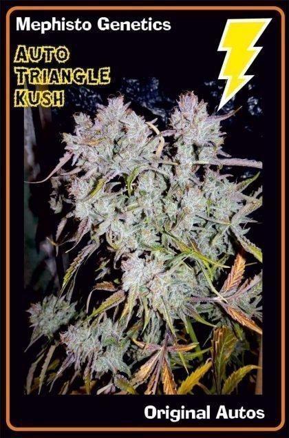 Mephisto Genetics Auto Triangle Kush Feminised Seeds