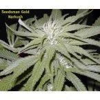 Seedsman Narkush Regular Seeds
