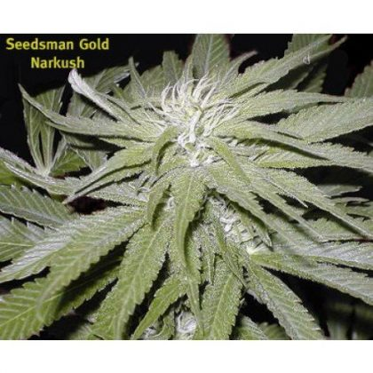 Seedsman Narkush Regular Seeds