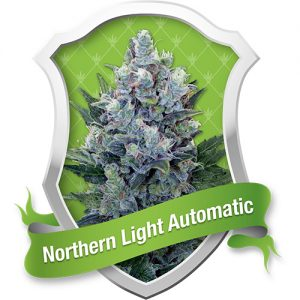 Royal Queen Seeds Northern Light Automatic Feminised Seeds