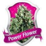 Power Flower Feminised Seeds
