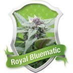 Royal Queen Seeds Royal Bluematic Automatic Feminised Seeds