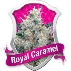 Royal Queen Seeds Royal Honey CreamFeminised Seeds
