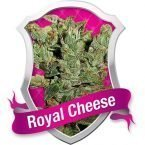 Royal Queen Seeds Royal Cheese Feminised Seeds