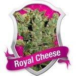 Royal Cheese Feminised Seeds