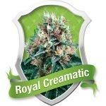 Royal Creamatic Automatic Feminised Seeds