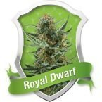Royal Queen Seeds Royal Dwarf Automatic Feminised Seeds