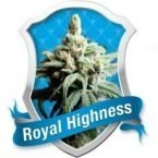 Royal Queen Seeds Royal Highness Feminised Seeds