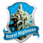 Royal Highness Feminised Seeds