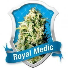 Royal Queen Seeds Royal Medic Feminised Seeds