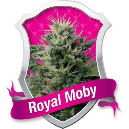 Royal Queen Seeds Royal Moby Feminised Seeds