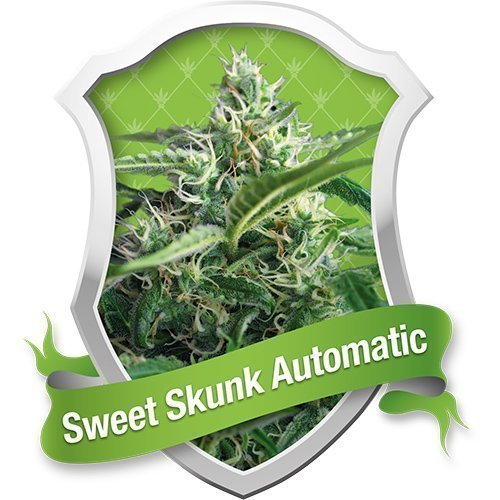 Royal Queen Seeds Sweet Skunk Automatic Feminised Seeds