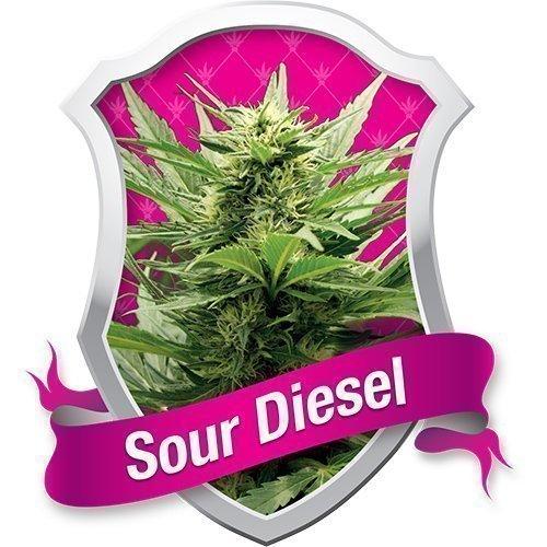 Royal Queen Seeds Sour Diesel Feminised Seeds
