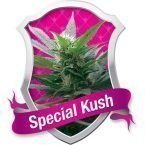 Royal Queen Seeds Special Kush #1 Feminised Seeds