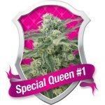 Special Queen #1 Feminised Seeds