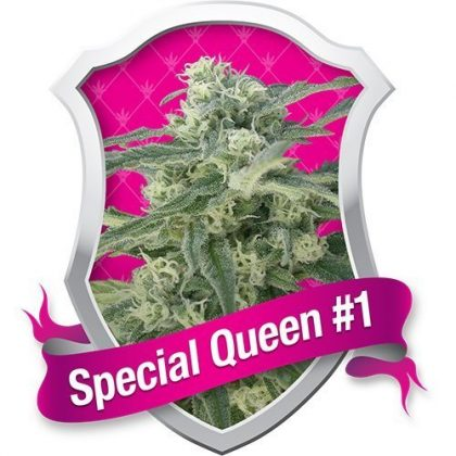 Royal Queen Seeds Special Queen #1 Feminised Seeds