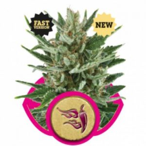 Royal Queen Seeds Speedy Chile FAST VERSION Feminised Seeds