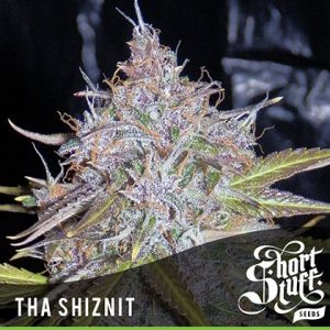 shortstuff seeds Auto Tha Shiznit feminised