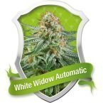 Royal Queen Seeds White Widow Automatic Feminised seeds