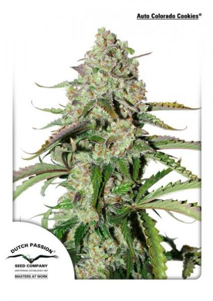 Dutch Passion Auto Colorado Cookies Feminised seeds