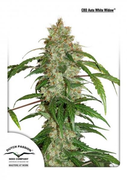 Dutch Passion CBD Auto White Widow feminised seeds