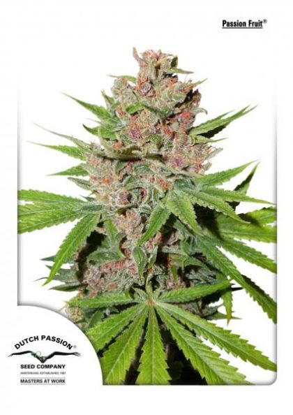 Dutch Passion Passion Fruit Feminised Seeds