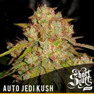 Shortstuff seeds Auto Jedi Kush feminised