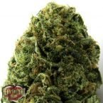 Heavyweight Seeds Auto Massive Midget Feminised Seeds