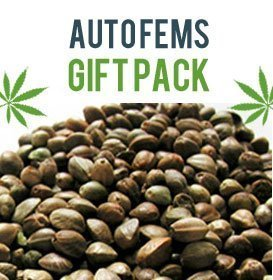 Auto Flower Gift Pack