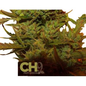 CH9 female seeds Automatic Climax