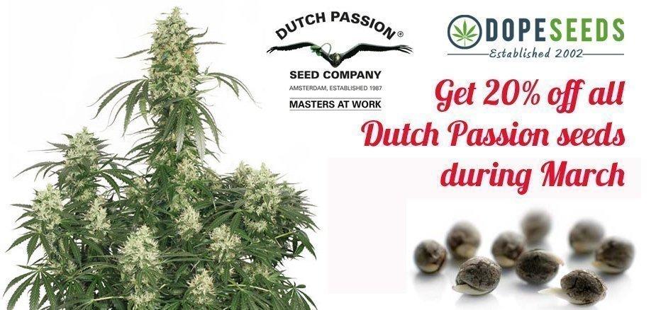 dutch passion seeds discount
