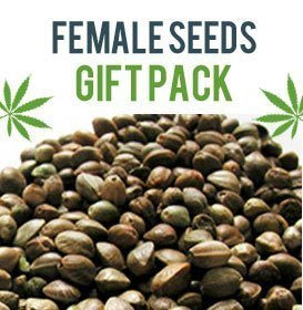 Photoperiod Female Seeds Gift Pack