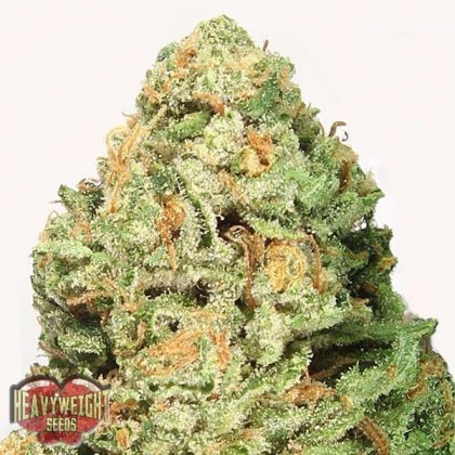 Heavyweight Seeds Fruit Punch Feminised Seeds